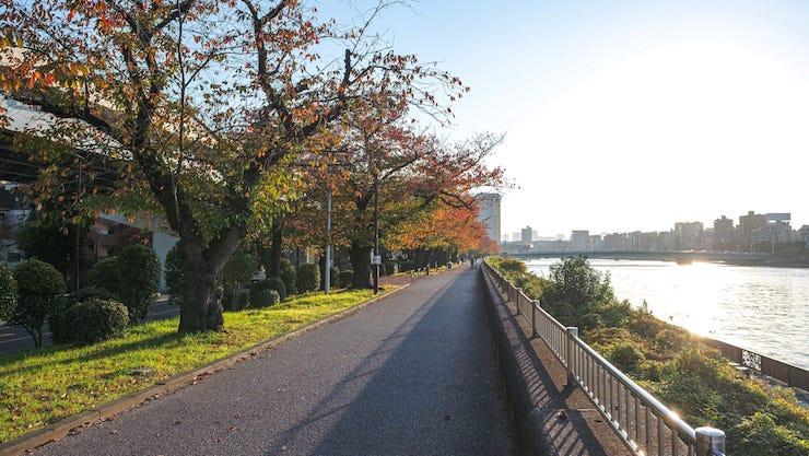 隅田川堤防