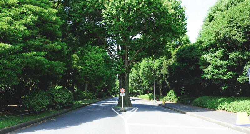 7.8kmの皇居ラン アレンジランニングコースガイド 科学技術館近くの木