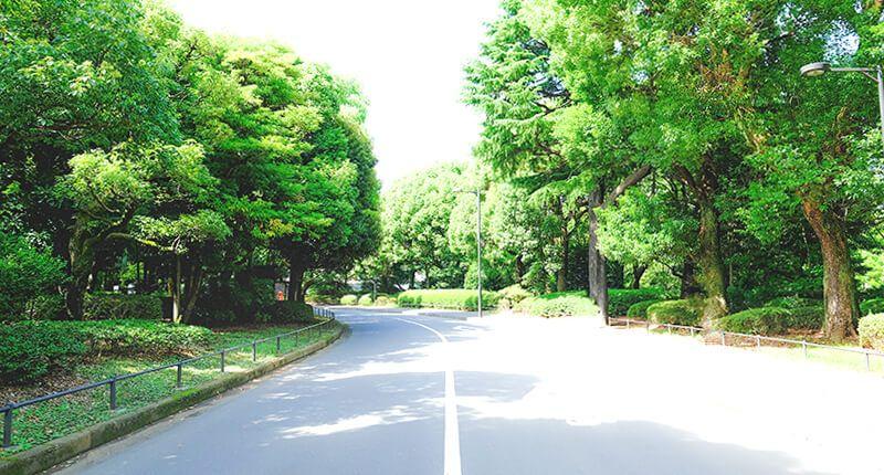 6.2kmの皇居ラン アレンジランニングコースガイド 北の丸公園内